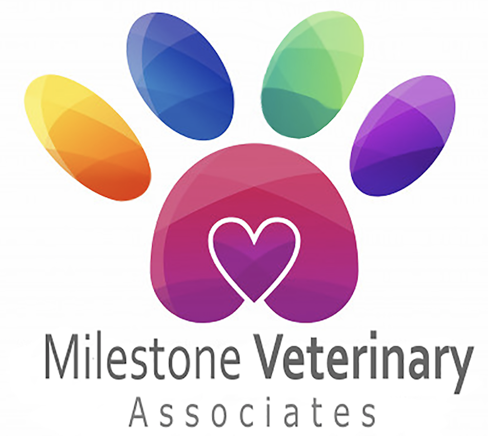 Animal Hospital Greer, SC | Milestone Veterinary Associates